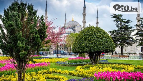 За Фестивала на Лалето в Истанбул #1