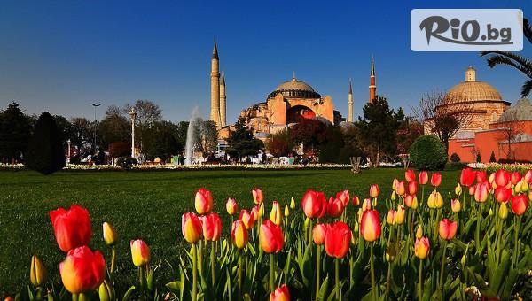 Фестивала на лалето в Истанбул #1