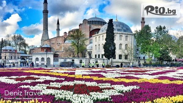 Фестиавал на Лалето в Истанбул #1